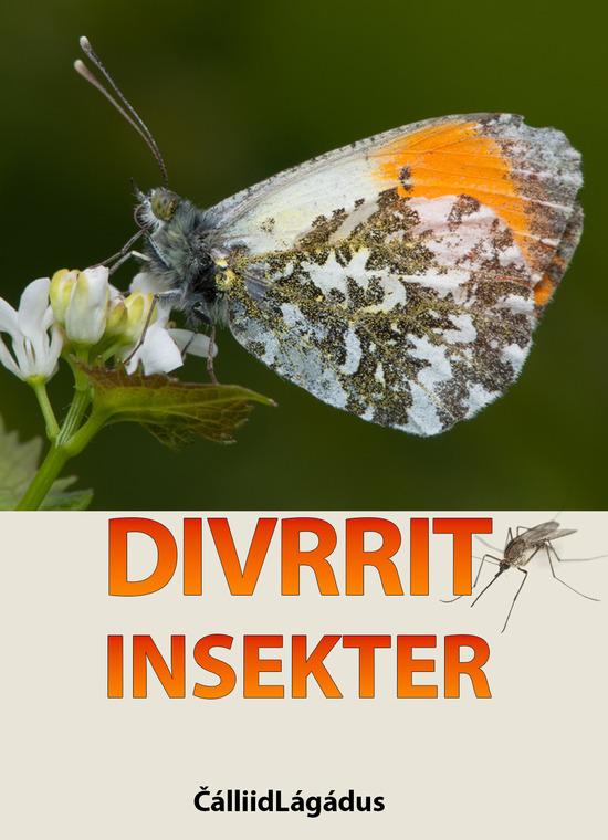 divrrit_-_insekter